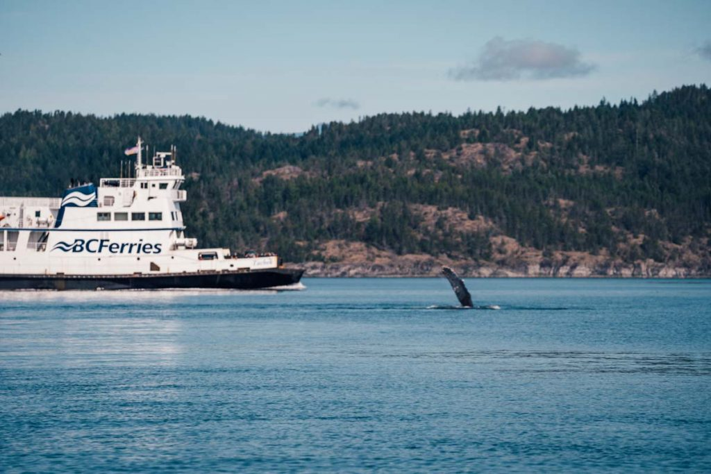 BC Ferry to Tofino with a humpback whale