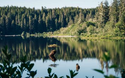FAIRY LAKE BONSAI TREE | Port Renfrew