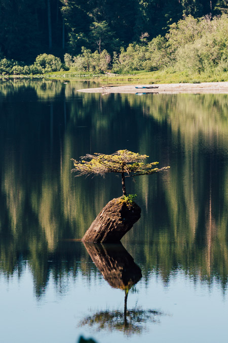 Fairy Lake Bonsai Tree in Port Renfrew