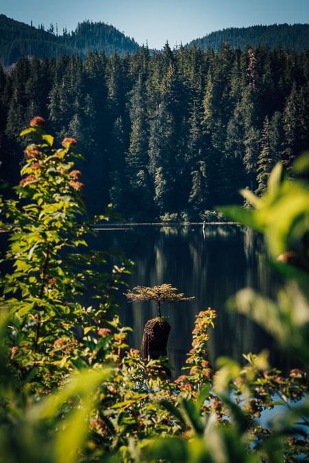 Fairy Lake Port Renfrew